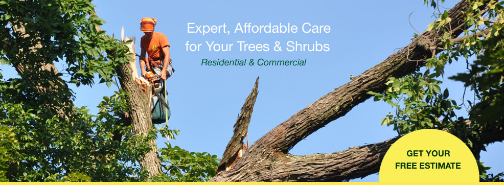 north hill tree experts, baltimore tree removal